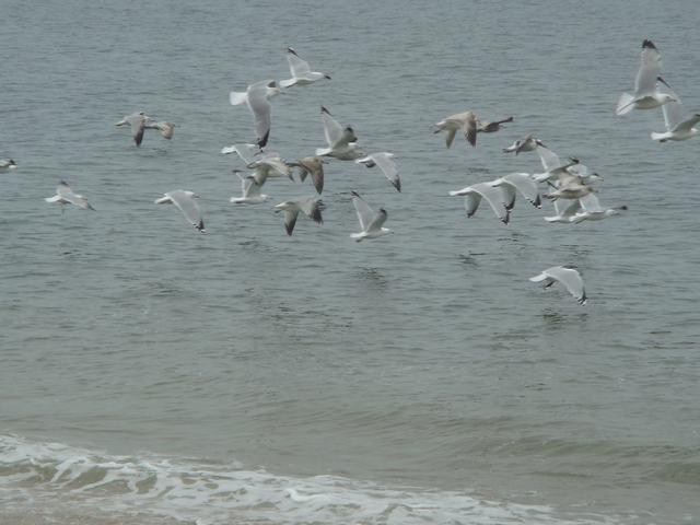 ロングアイランドの海辺を散歩して、_d0100880_9295768.jpg