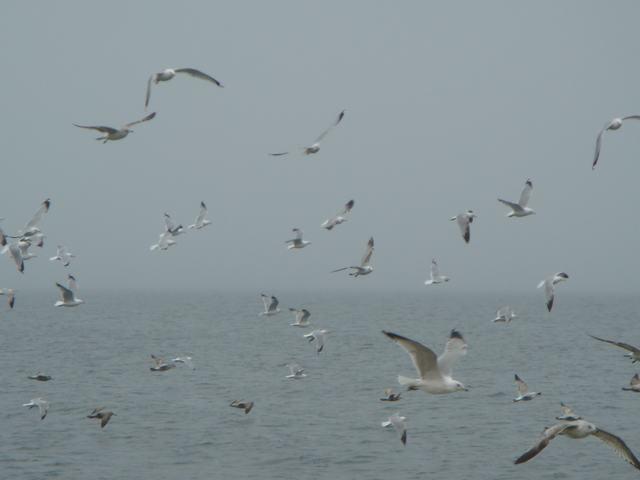 ロングアイランドの海辺を散歩して、_d0100880_9302861.jpg