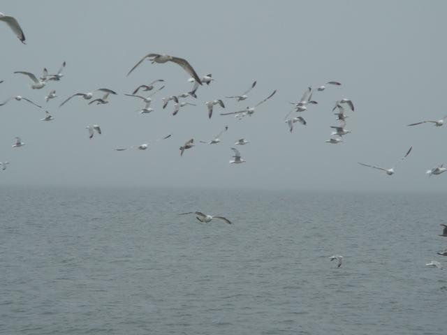 ロングアイランドの海辺を散歩して、_d0100880_9305662.jpg