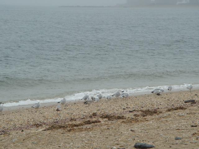 ロングアイランドの海辺を散歩して、_d0100880_9312017.jpg
