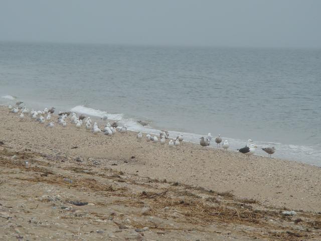 ロングアイランドの海辺を散歩して、_d0100880_9315269.jpg