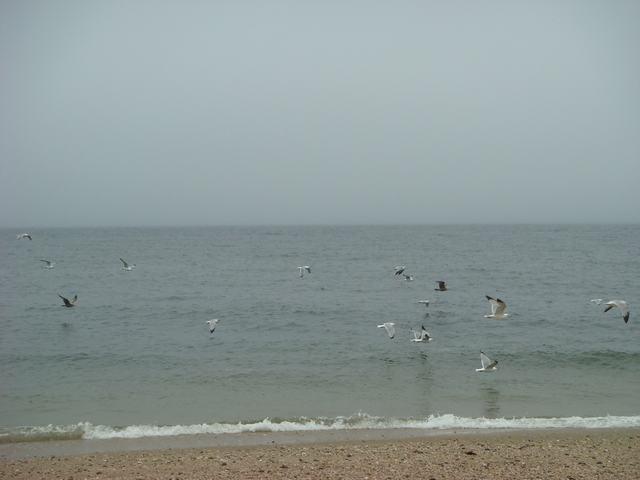 ロングアイランドの海辺を散歩して、_d0100880_9322872.jpg
