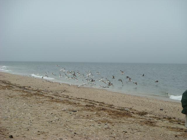 ロングアイランドの海辺を散歩して、_d0100880_932331.jpg