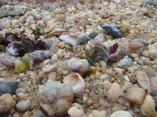 ロングアイランドの海辺を散歩して、_d0100880_9344875.jpg