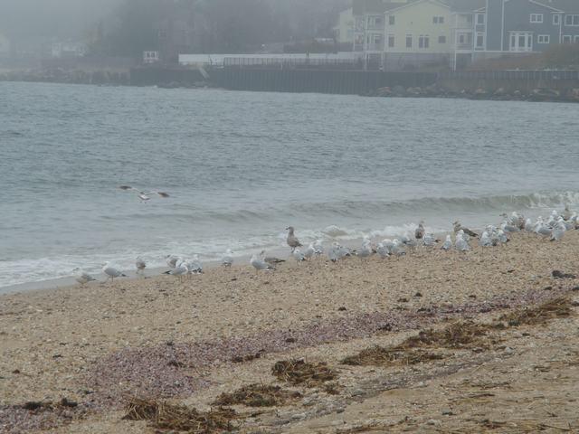 ロングアイランドの海辺を散歩して、_d0100880_9382798.jpg