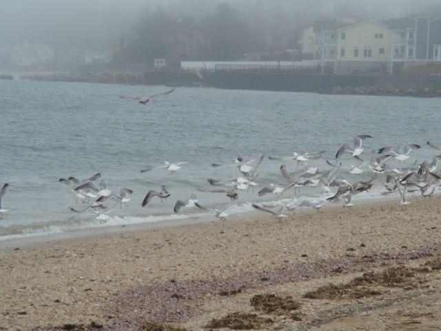 ロングアイランドの海辺を散歩して、_d0100880_9385430.jpg