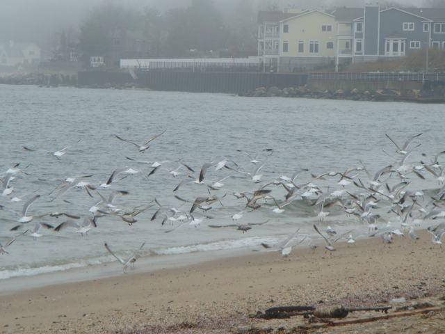ロングアイランドの海辺を散歩して、_d0100880_9393255.jpg