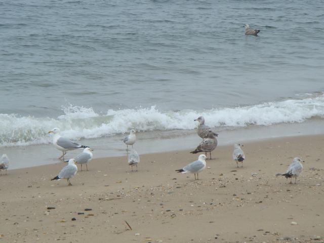ロングアイランドの海辺を散歩して、_d0100880_9394837.jpg