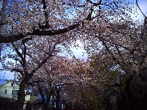 京都へ  フウサワシュンスケ_b0048882_18223985.jpg