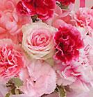 FLORA*2 母の日フラワーギフト 4/11(木)ブログにて更新予定です_a0115684_2347932.jpg