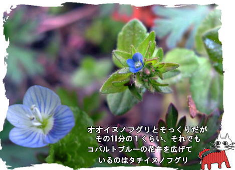 f0137096_252248.jpg
