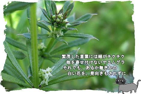 f0137096_26475.jpg