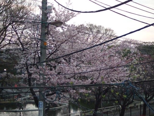 桜のお花見パーティ_e0123104_6175126.jpg