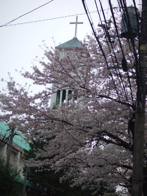 桜のお花見パーティ_e0123104_62641100.jpg