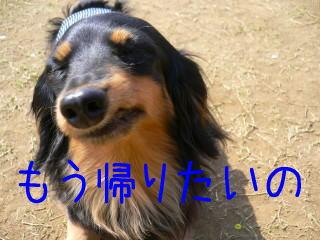 b0151505_17321369.jpg
