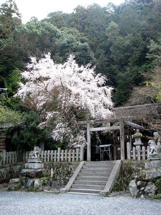 大豊神社_e0048413_20214618.jpg