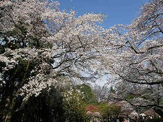 神代植物園_c0025217_0103327.jpg