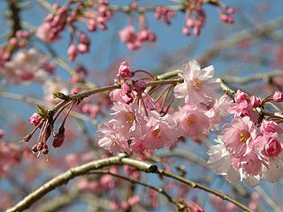 神代植物園_c0025217_011255.jpg