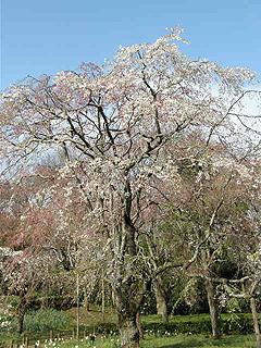 神代植物園_c0025217_0121829.jpg