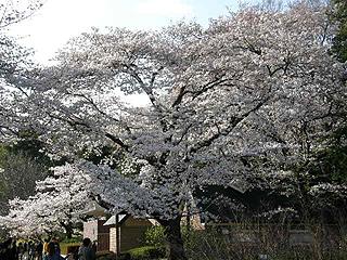 神代植物園_c0025217_0122750.jpg
