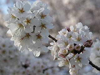 神代植物園_c0025217_0123957.jpg