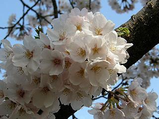 神代植物園_c0025217_0124869.jpg
