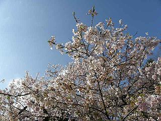 神代植物園_c0025217_013111.jpg
