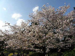 神代植物園_c0025217_013246.jpg