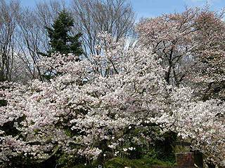 神代植物園_c0025217_0142735.jpg