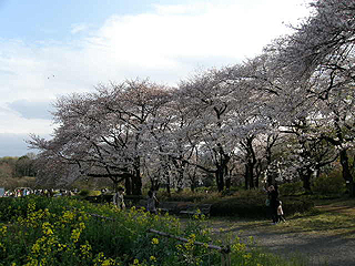 神代植物園_c0025217_014399.jpg