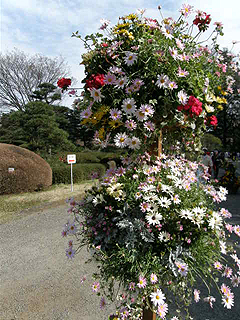 神代植物園_c0025217_041727.jpg