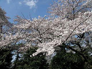 神代植物園_c0025217_042710.jpg