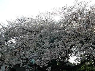 神代植物園_c0025217_052164.jpg
