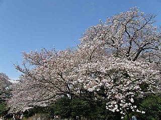 神代植物園_c0025217_05447.jpg