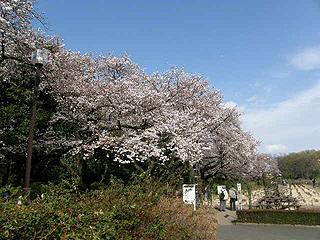 神代植物園_c0025217_055194.jpg