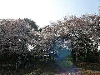 神代植物園_c0025217_05868.jpg