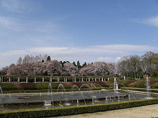 神代植物園_c0025217_06745.jpg