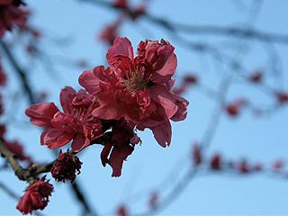 神代植物園_c0025217_07357.jpg