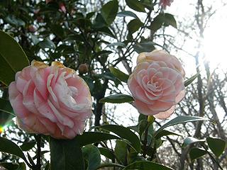 神代植物園_c0025217_07599.jpg