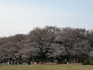 神代植物園_c0025217_08276.jpg