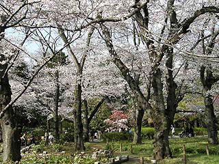 神代植物園_c0025217_083420.jpg