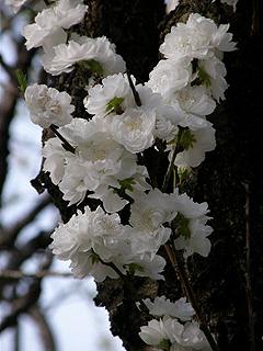 神代植物園_c0025217_08768.jpg