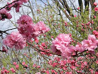 神代植物園_c0025217_092570.jpg