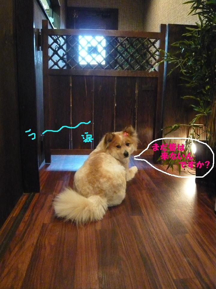 さみしくて・・・&初めてのトリミング!&犬濯屋レシピ♪_b0130018_12101817.jpg