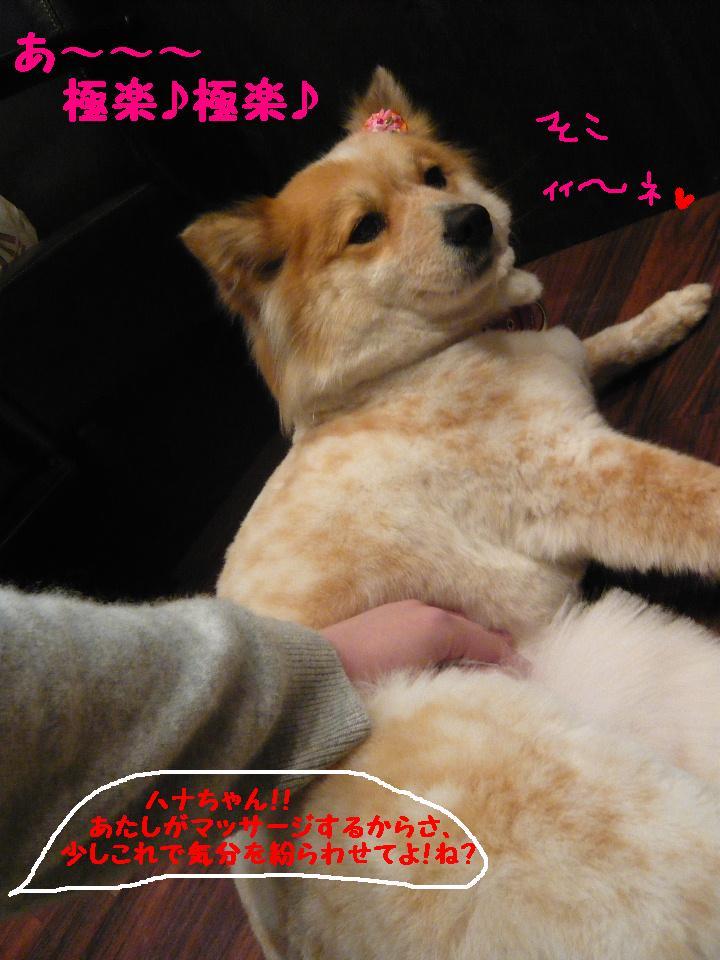 さみしくて・・・&初めてのトリミング!&犬濯屋レシピ♪_b0130018_1210251.jpg