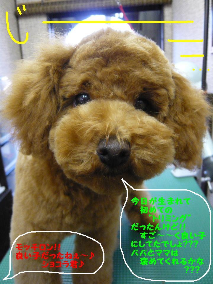 さみしくて・・・&初めてのトリミング!&犬濯屋レシピ♪_b0130018_1253170.jpg