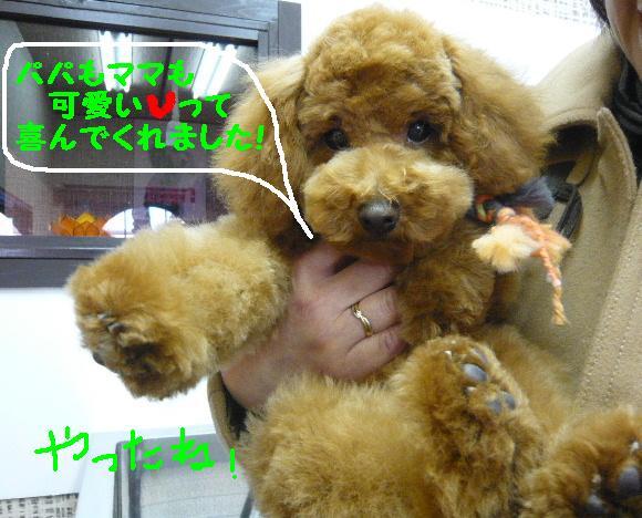 さみしくて・・・&初めてのトリミング!&犬濯屋レシピ♪_b0130018_1253823.jpg