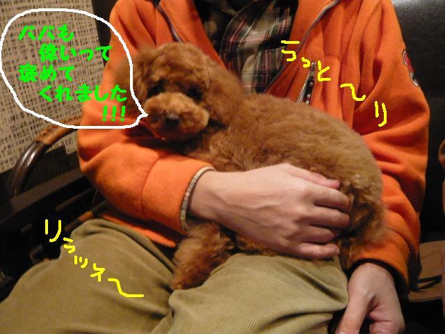 さみしくて・・・&初めてのトリミング!&犬濯屋レシピ♪_b0130018_1254593.jpg