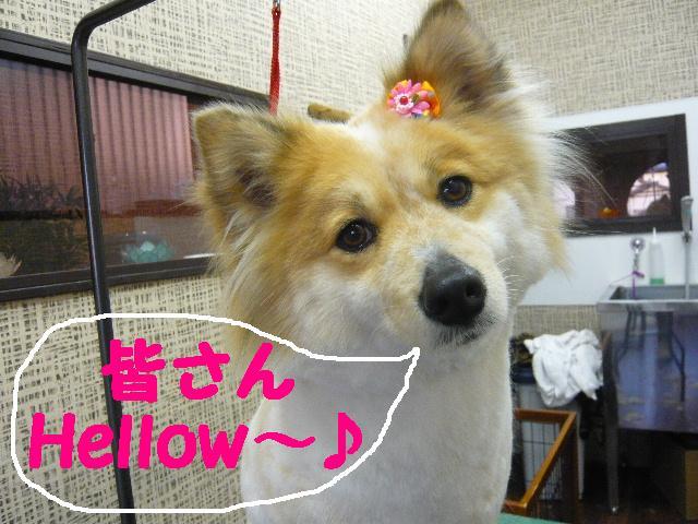 さみしくて・・・&初めてのトリミング!&犬濯屋レシピ♪_b0130018_1265296.jpg