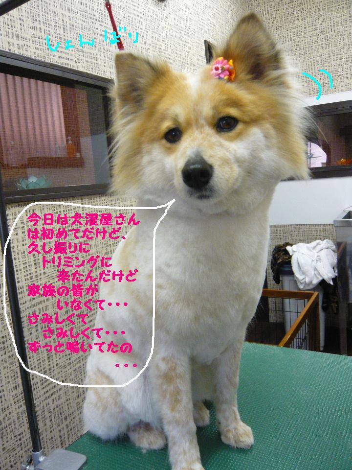 さみしくて・・・&初めてのトリミング!&犬濯屋レシピ♪_b0130018_1273831.jpg
